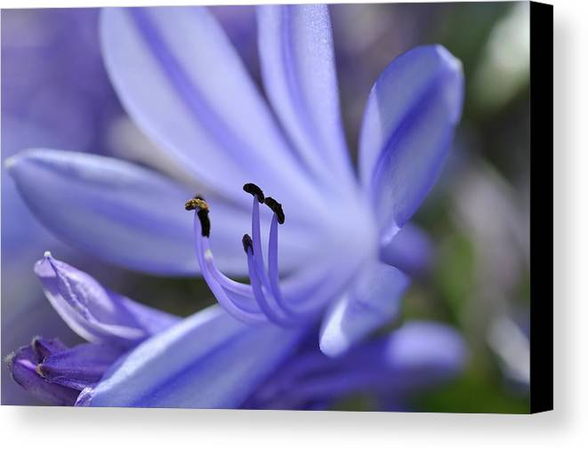 Horizontal Canvas Print featuring the photograph Purple Flower Close-up by Sami Sarkis
