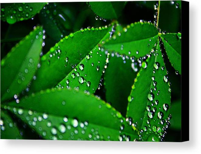 Nature Canvas Print featuring the photograph Rain Patterns by Toni Hopper