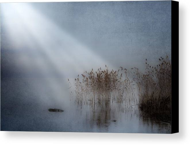 Reeds Canvas Print featuring the photograph Rays Of Light by Joana Kruse