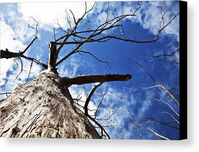 Tree Canvas Print featuring the photograph Reach The Sky by Tamar Toerien