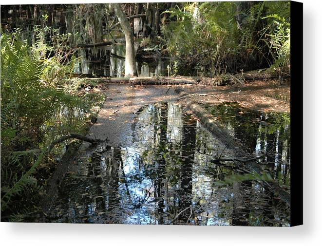 Tree Canvas Print featuring the photograph Road To Nowhere by Susie Carr