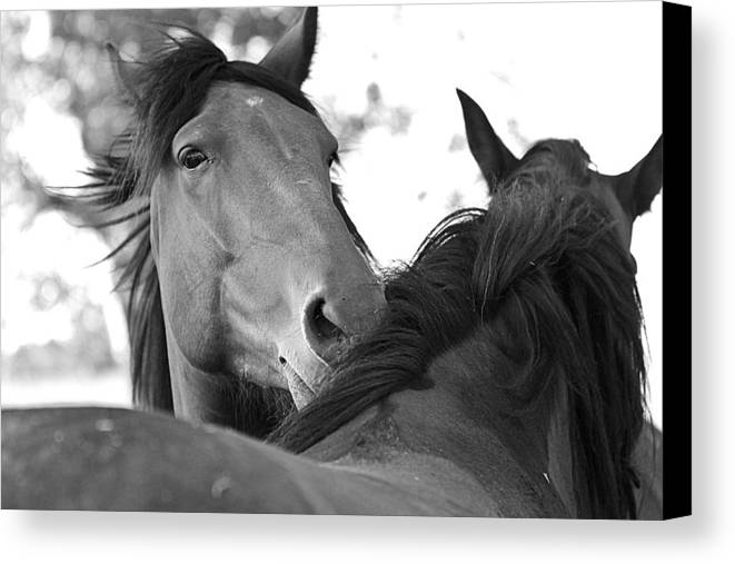 Horse Canvas Print featuring the photograph Safe by Elizabeth Hart