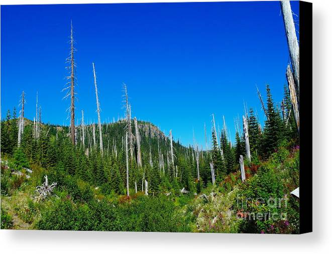 Dead Trees Canvas Print featuring the photograph Sand Blasted Trees by Jeff Swan