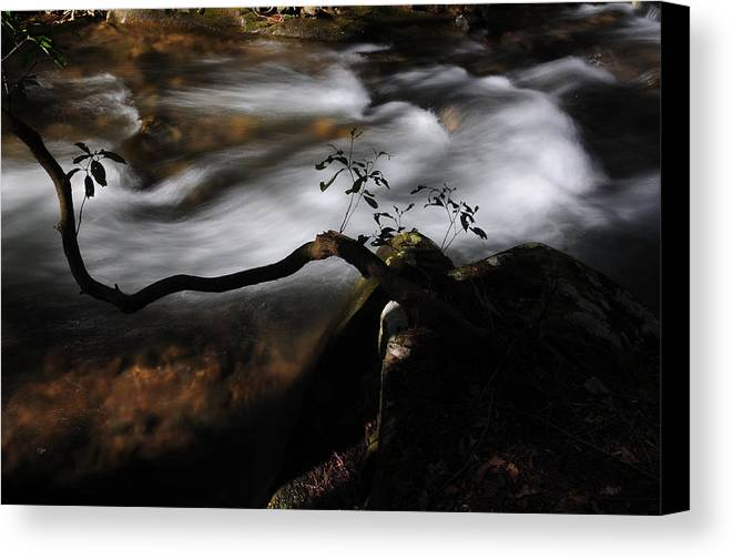 Water Canvas Print featuring the photograph Sappling Growing By The Stream by Michael Womack