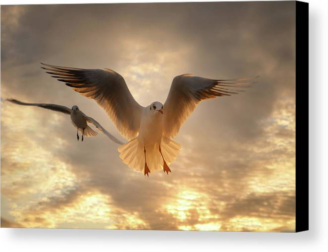 Horizontal Canvas Print featuring the photograph Seagull by GilG Photographie