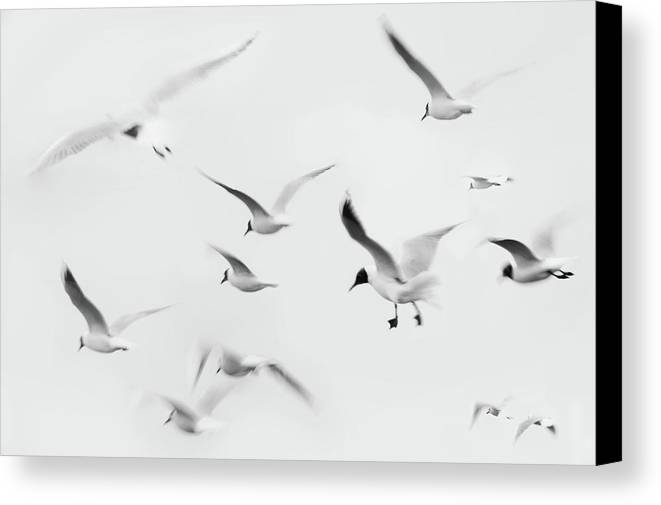 Horizontal Canvas Print featuring the photograph Seagulls by K.Arran - photomuso
