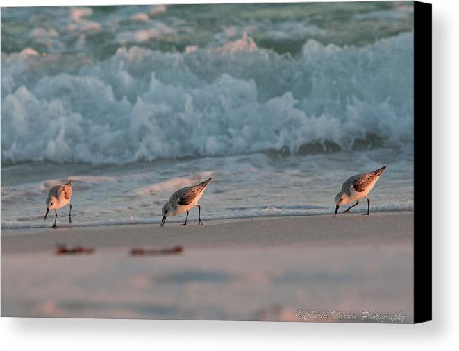 Seaside Canvas Print featuring the photograph Seaside Trio by Charles Warren