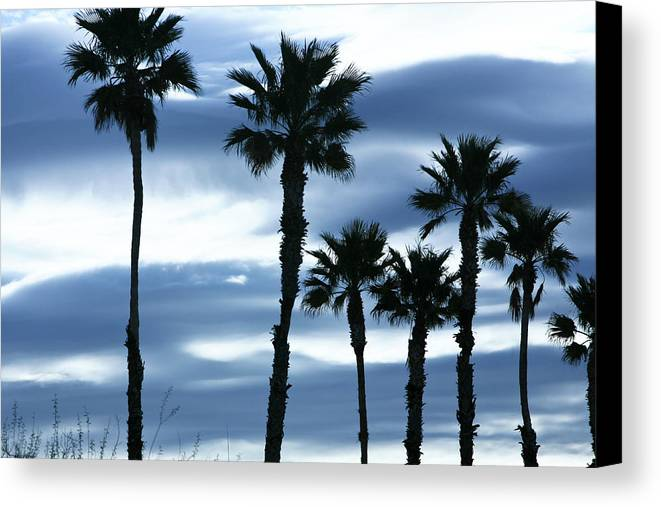 Landscape Canvas Print featuring the photograph Seven Palms by Gilbert Artiaga