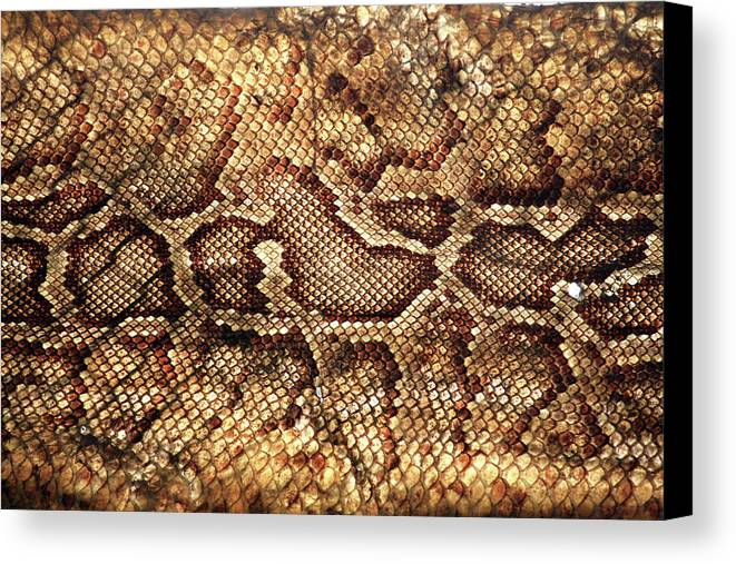 Horizontal Canvas Print featuring the photograph Snake Skin by Abner Merchan