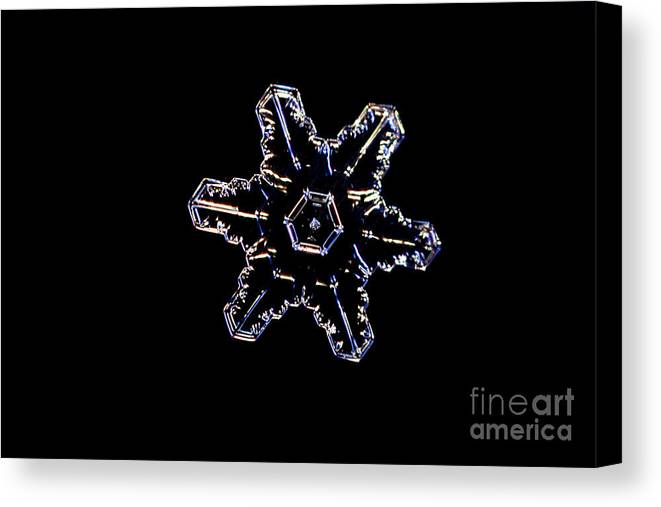 Snow Canvas Print featuring the photograph Snowflake by Ted Kinsman