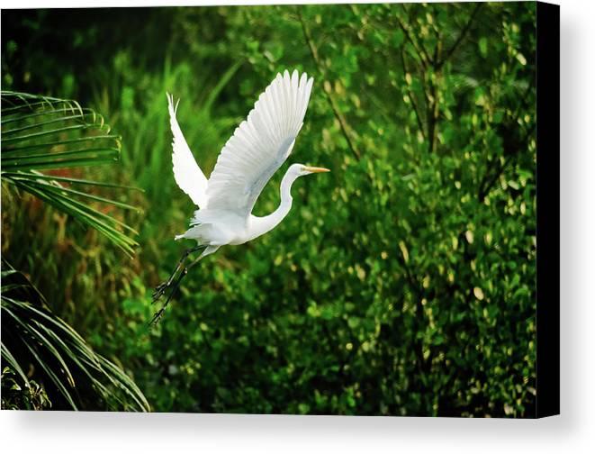 Horizontal Canvas Print featuring the photograph Snowy Egret Bird by Shahnewaz Karim