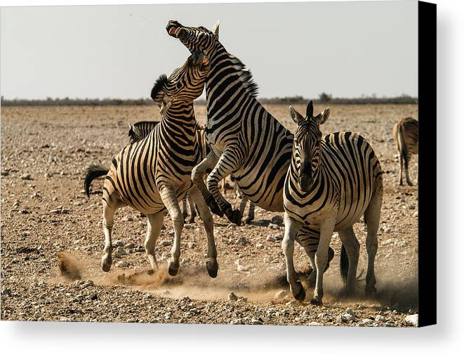 Action Canvas Print featuring the photograph Sour Stripes by Alistair Lyne