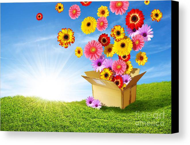 Background Canvas Print featuring the photograph Spring Delivery by Carlos Caetano