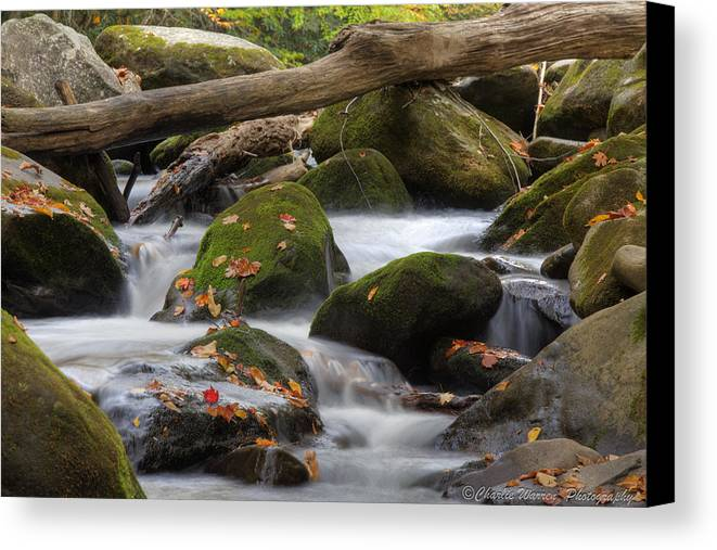 Stream Canvas Print featuring the photograph Stream Of Thought by Charles Warren