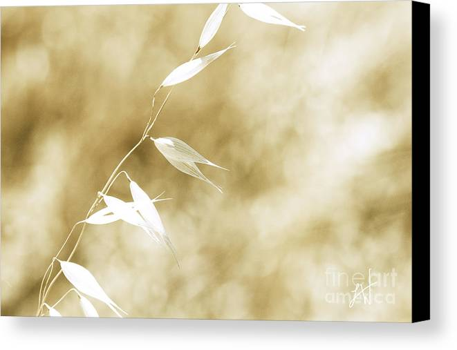 Summer Wheat Canvas Print featuring the photograph Summer Grass by Artist and Photographer Laura Wrede