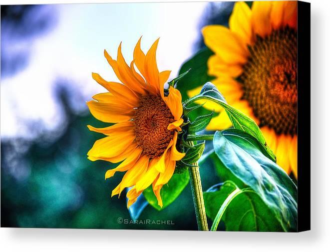 Community Garden Canvas Print featuring the photograph Sunflower Smile by Sarai Rachel