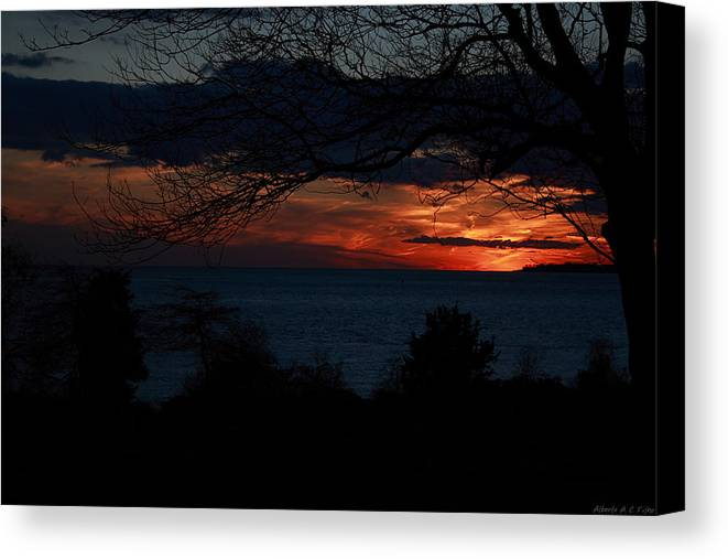 Sunset Canvas Print featuring the photograph Sunset Tree Closeup by Alberto Filho