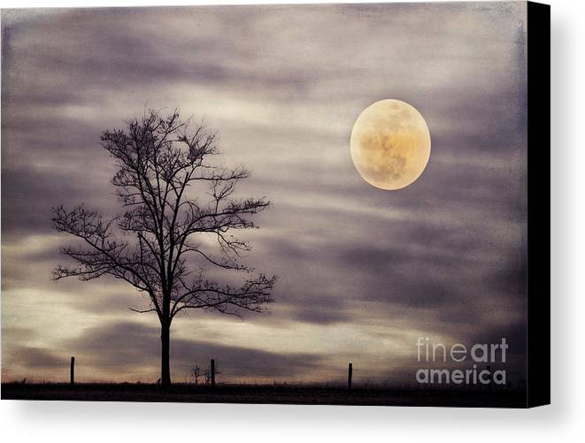Alone Canvas Print featuring the photograph Super Moon by Darren Fisher