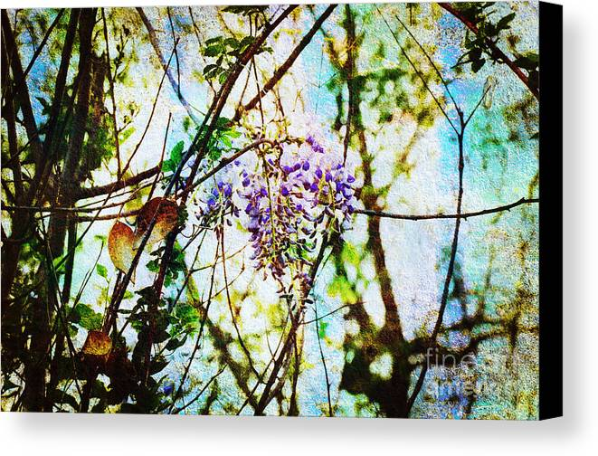Wisteria Canvas Print featuring the photograph Tangled Wisteria by Andee Design