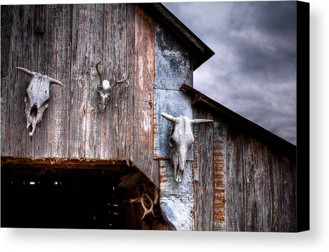 Cow Canvas Print featuring the photograph The Broad Side Of A... by Pixel Perfect by Michael Moore