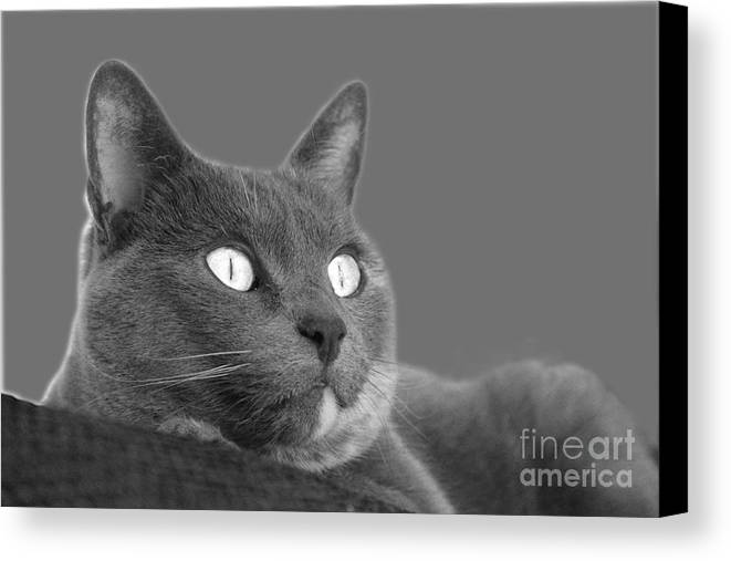 Cat Canvas Print featuring the photograph The Eyes Have It by Nareeta Martin