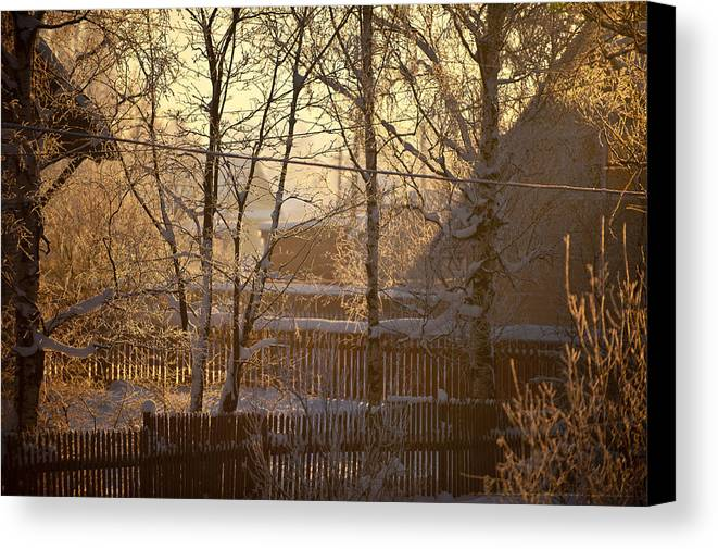 Winter Canvas Print featuring the photograph The Frosty Morning by Nikolay Krusser