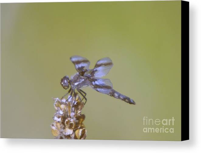 Dragonfly Canvas Print featuring the photograph The Wounded Rests by Jeff Swan