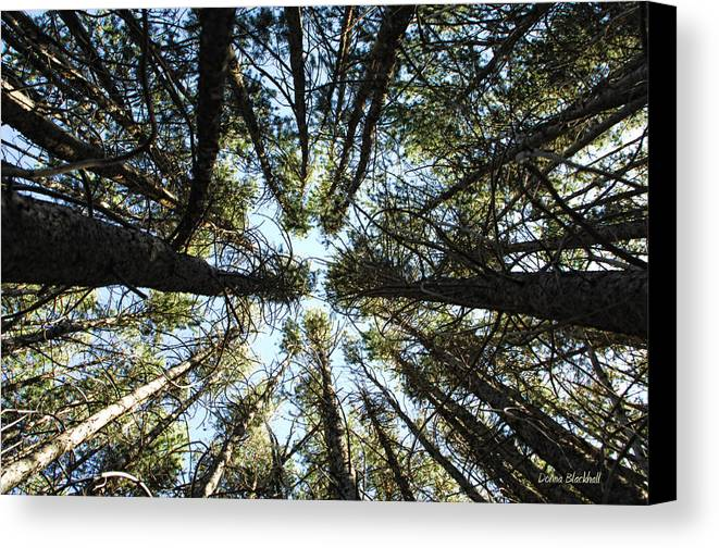 Trees Canvas Print featuring the photograph Things Are Looking Up by Donna Blackhall