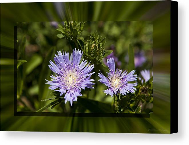 Thistle Canvas Print featuring the photograph Thistle 131 by Charles Warren