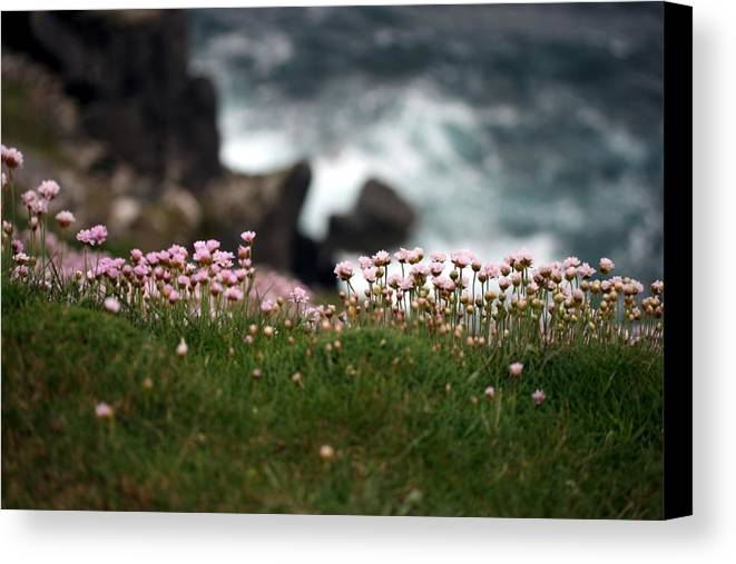 Pink Canvas Print featuring the photograph Tiny Pink Flowers by Pamela Corey