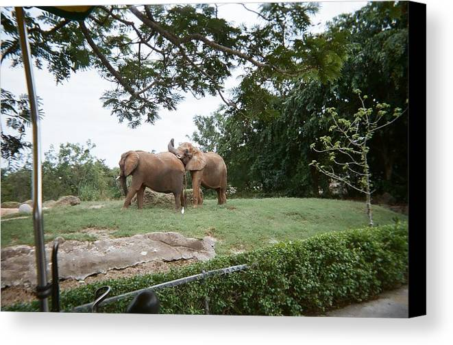 Elephant Canvas Print featuring the photograph Too Close For Comfort by Val Oconnor