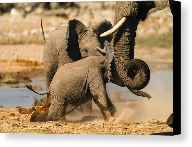 A Baby Elephants Play Canvas Print featuring the photograph Tough Play 2 by Alistair Lyne