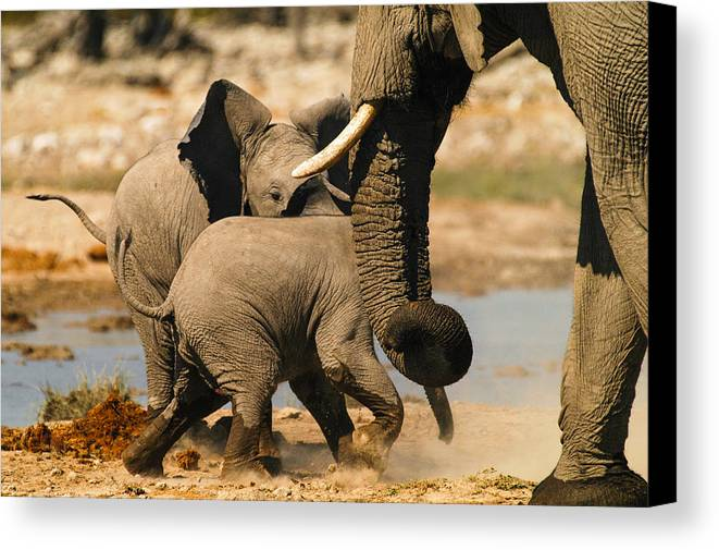 A Baby Elephants Play Canvas Print featuring the photograph Tough Play 3 by Alistair Lyne