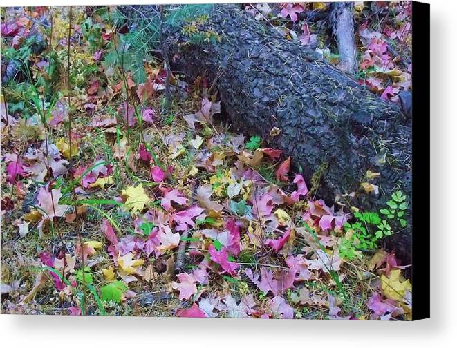 Tree Canvas Print featuring the photograph Tree And Leaves by Jayne Kerr