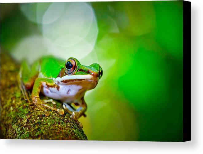 Horizontal Canvas Print featuring the photograph Tree Frog by Albert Tan photo