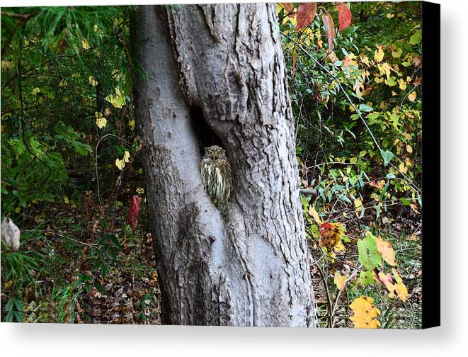 Canvas Print featuring the mixed media Tree Nook With Owl by Stacy Brock