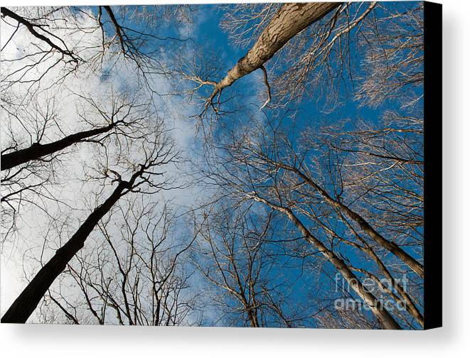 Long Sault Canvas Print featuring the photograph Tree Tops On The Wild Turkey Trail by Gary Chapple