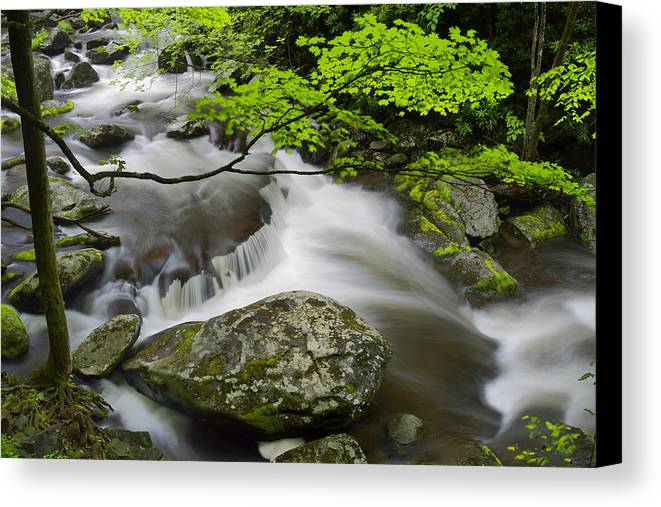 Landscape Canvas Print featuring the photograph Tremont Spring In Great Smoky Mountains by Darrell Young