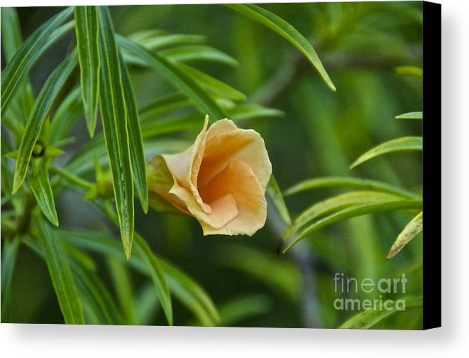 Photography Canvas Print featuring the photograph Tropical Flora by Sean Griffin