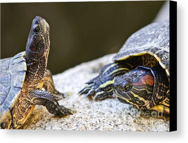 Turtles Canvas Print featuring the photograph Turtle Conversation by Elena Elisseeva