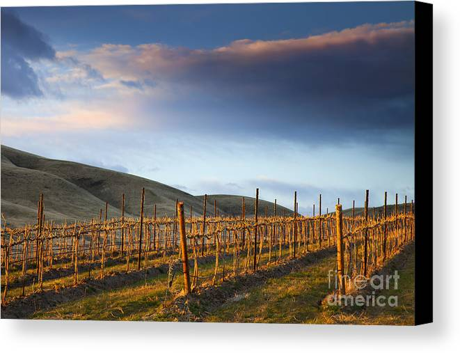 Vineyard Canvas Print featuring the photograph Vineyard Storm by Mike Dawson