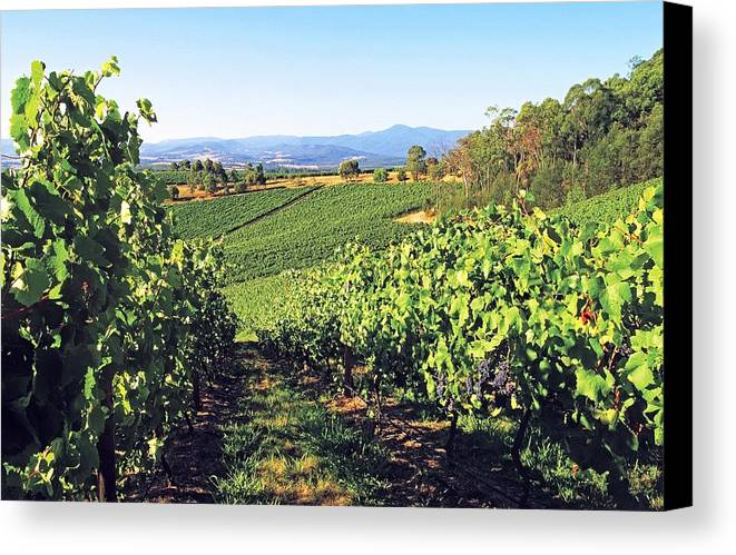 Horizontal Canvas Print featuring the photograph Vineyards In The Yarra Valley, Victoria, Australia by Peter Walton Photography