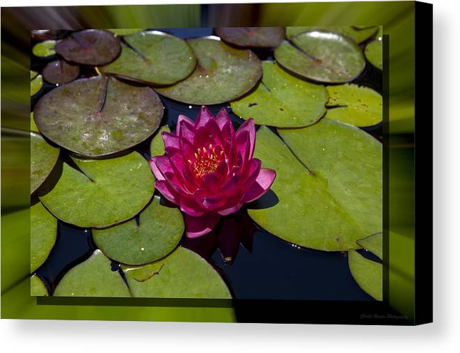 Water Lilly Canvas Print featuring the photograph Water Lilly 4 by Charles Warren