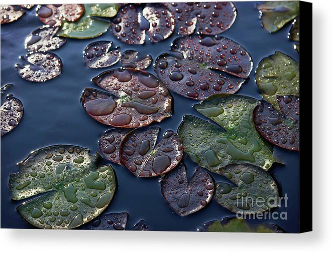 Plant Canvas Print featuring the photograph Water Lily Leaves by Susan Isakson