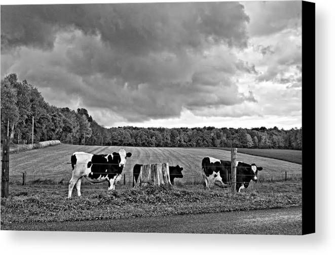 Pennsylvania Canvas Print featuring the photograph Weather Talk Monochrome by Steve Harrington