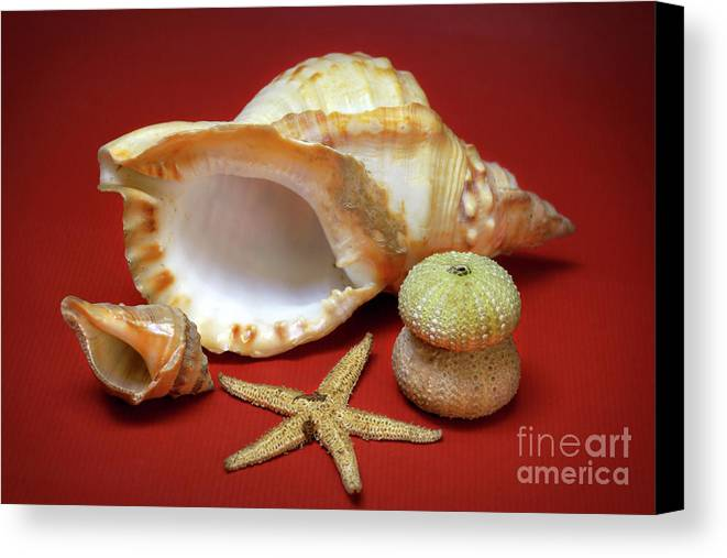 Animal Canvas Print featuring the photograph Whelks by Carlos Caetano