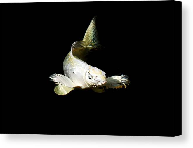 Koi Canvas Print featuring the photograph White Angel by Don Mann
