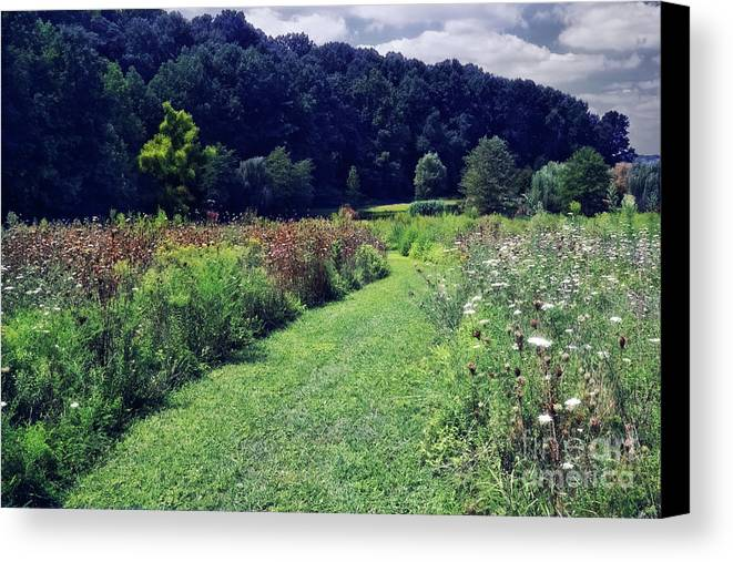 Garden Canvas Print featuring the photograph Wildflower Field Evening by Susan Isakson