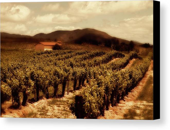 California Canvas Print featuring the photograph Wine Country by Peter Tellone