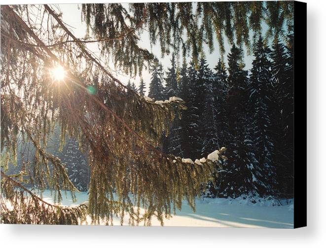 Winter Canvas Print featuring the photograph Winter by Franz Roth